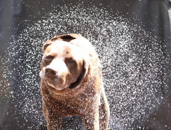 dog-shake-120814